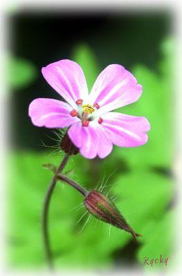 Petite fleur sauvage...