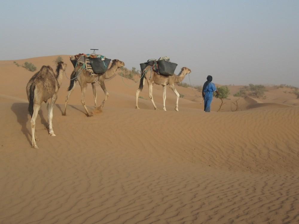 petite méharée dans le Sahara marocain 2
