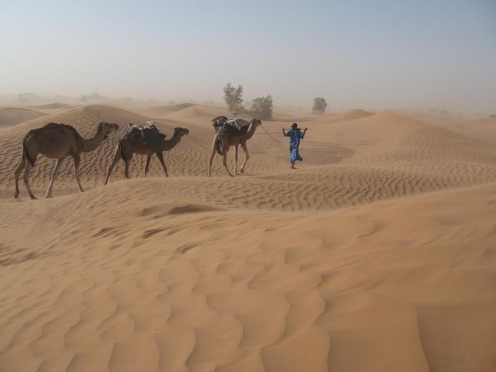 Petite méharée dans le Sahara marocain