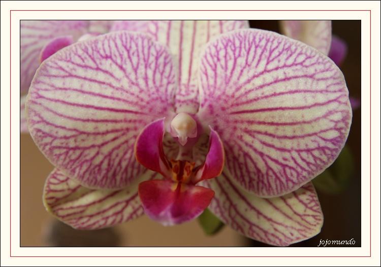 """"""" petite orchidée """""""