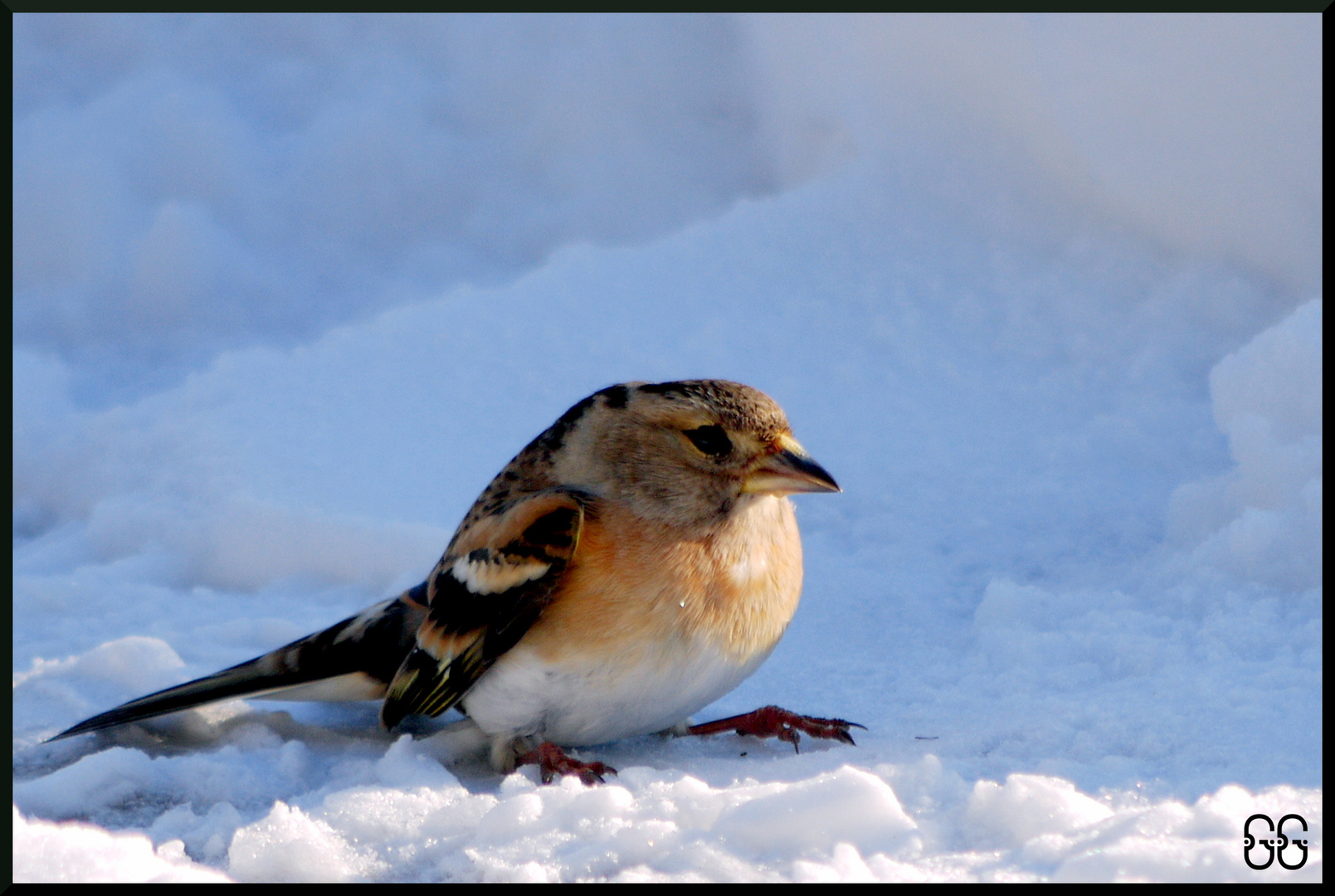 petite pause dans la neige.......