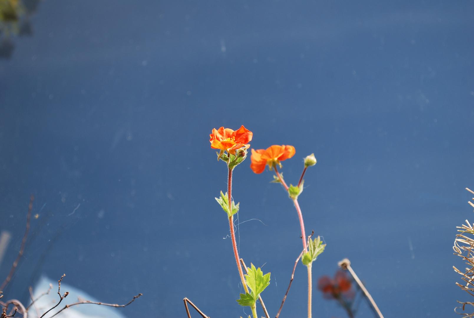 petite pousse de fleurs
