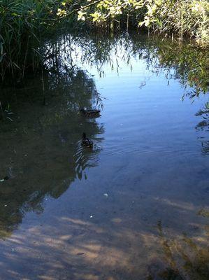 petite riviere a Creutzwald