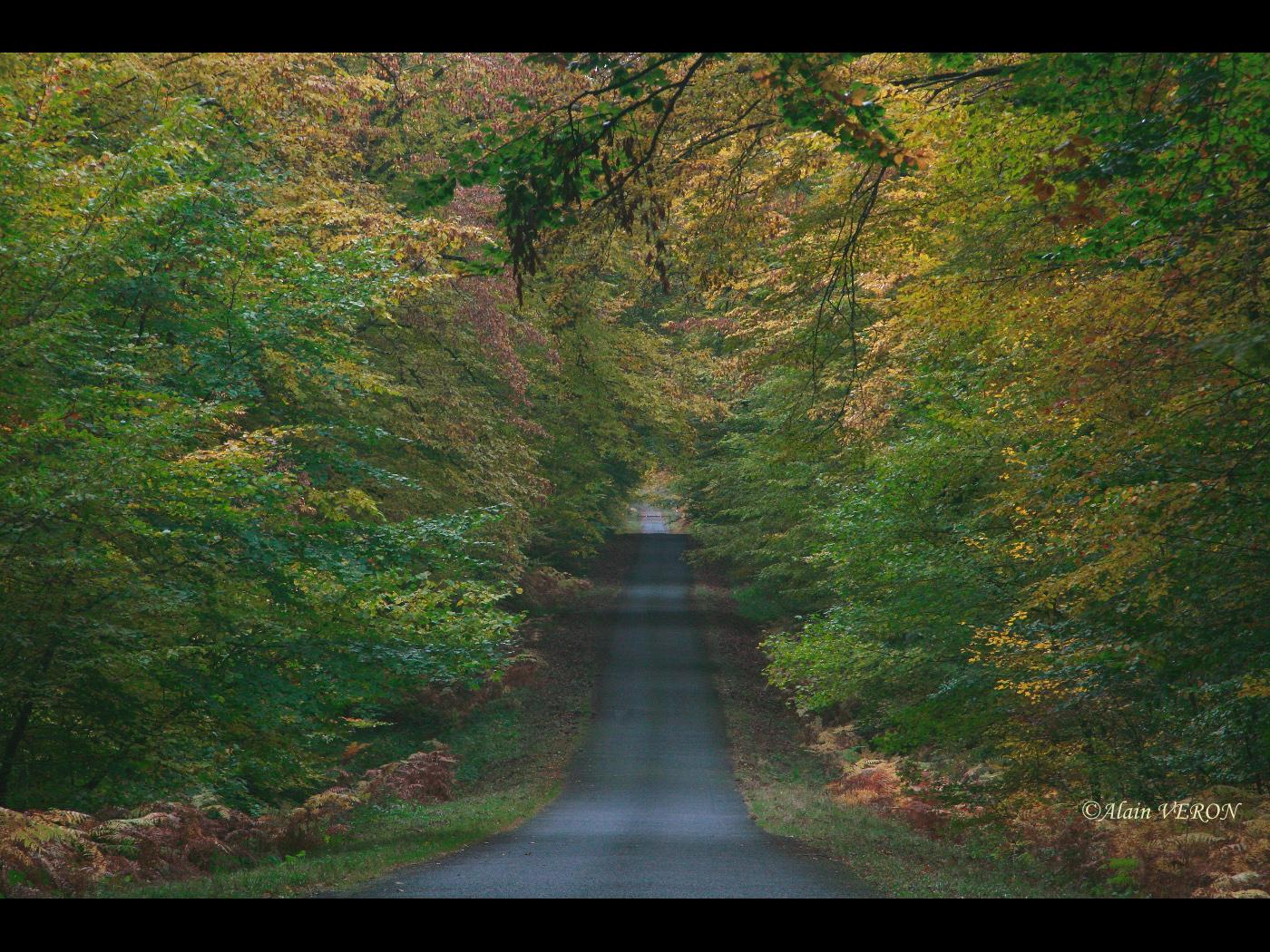 petite route d'automne