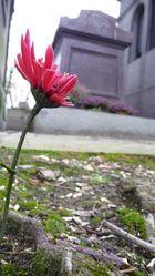 Petite vie sur champ de morts