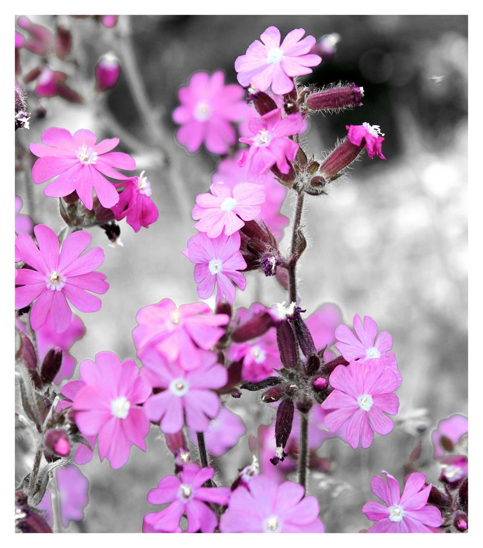 petites fleur