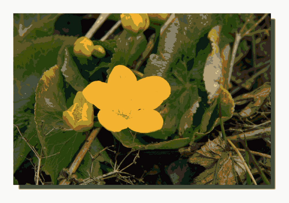 petites fleurs de champs, relooké!