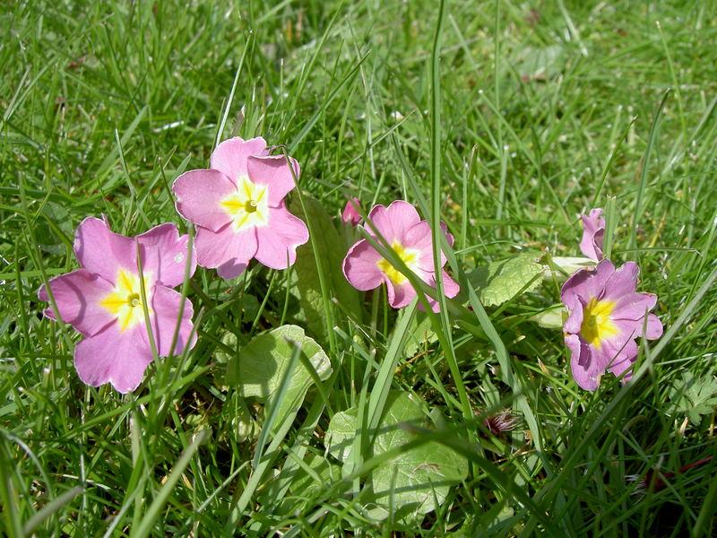 Petites fleurs de jardin.