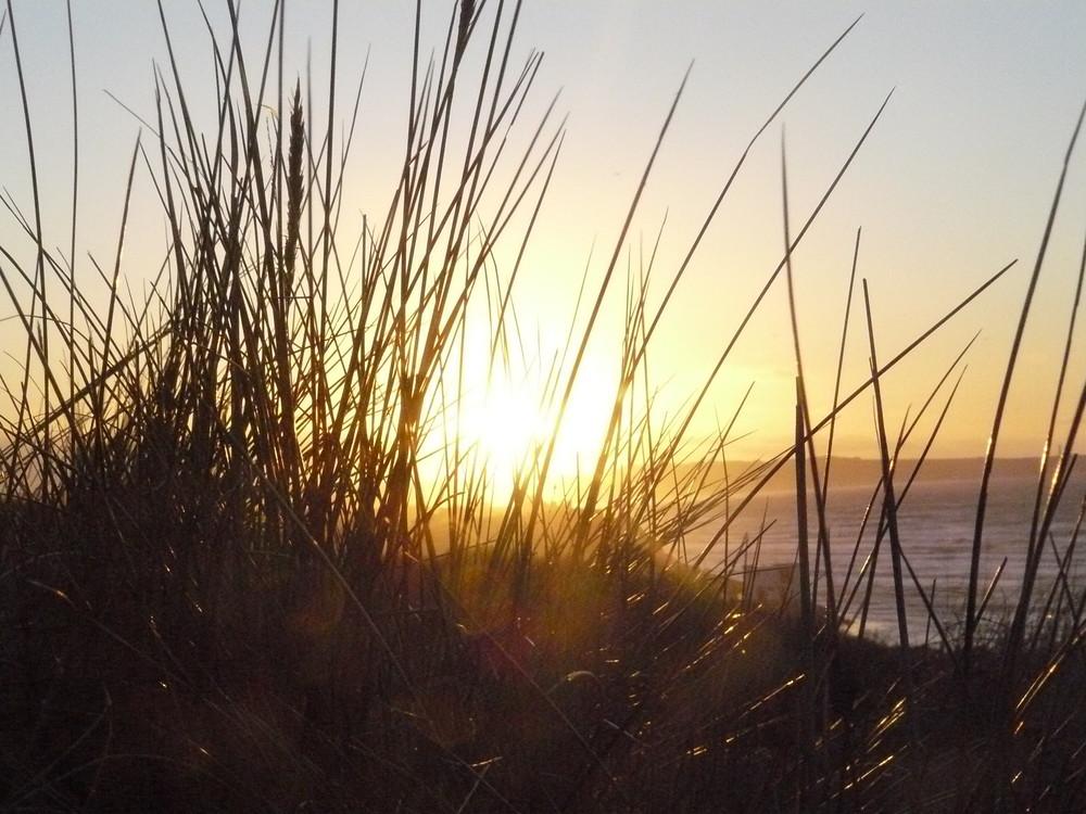 petites herbes des dunes à la lueur du soleil couchant