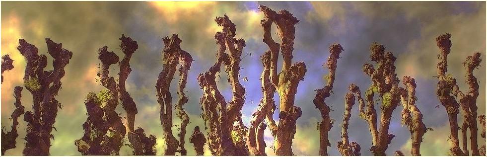 Petites sculptures printanières dans les arbres