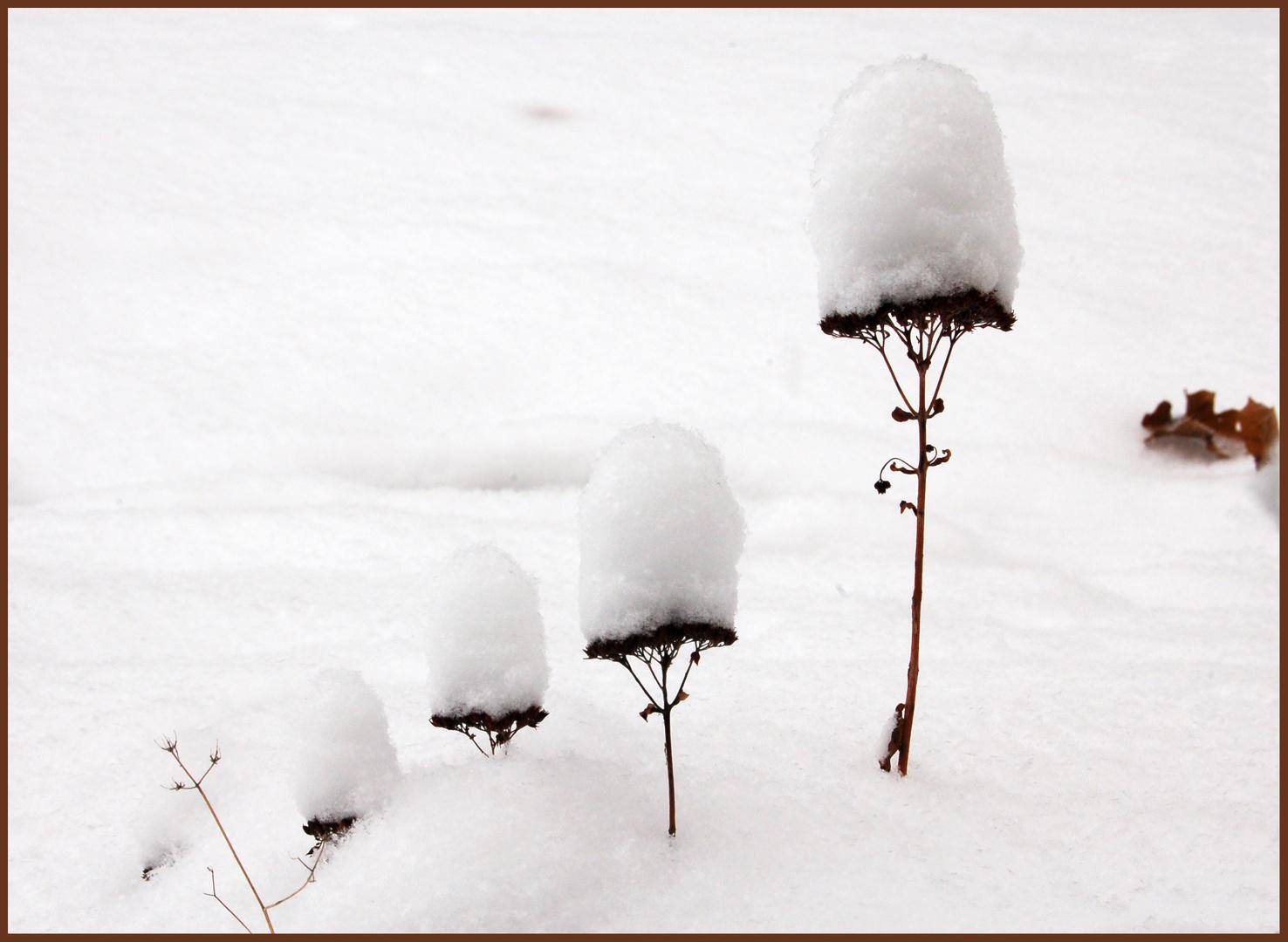 petits dômes de neige