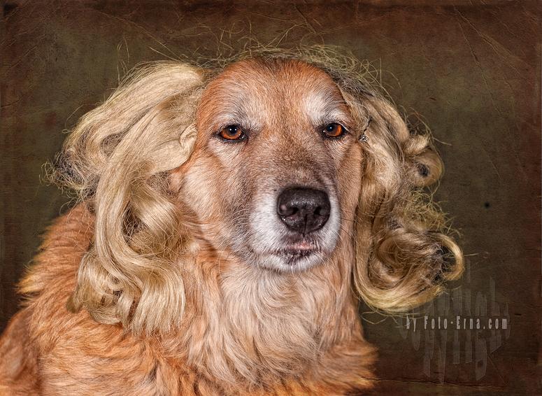 Petrosilia Zwackelhund