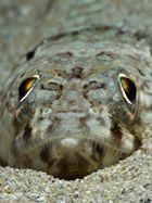 pez lagarto