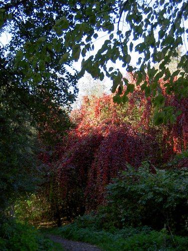 Pfad des Waldes