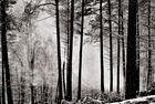 Pfälzer Wald (1)