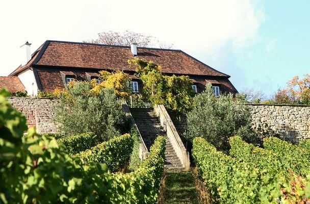 Pfälzer Weingut