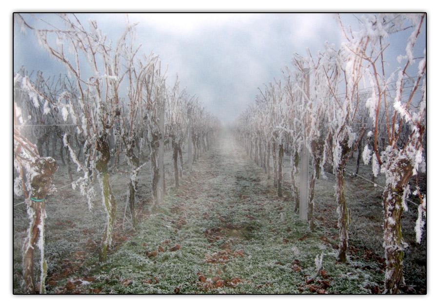pfalz-frost 1