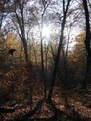 Pfalz Herbst 04