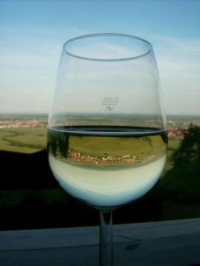 Pfalz im Wein