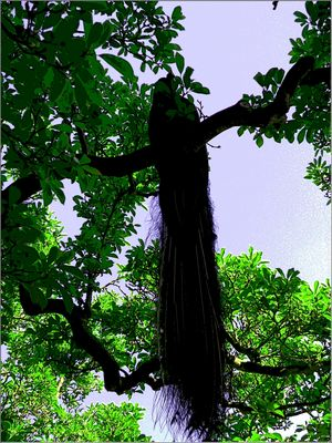 Pfau im Baum