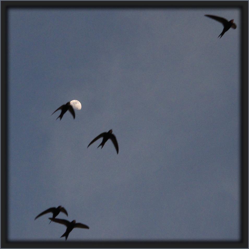 Pfeilschnelle Schatten am Himmel / Ombre sfrecciante in cielo