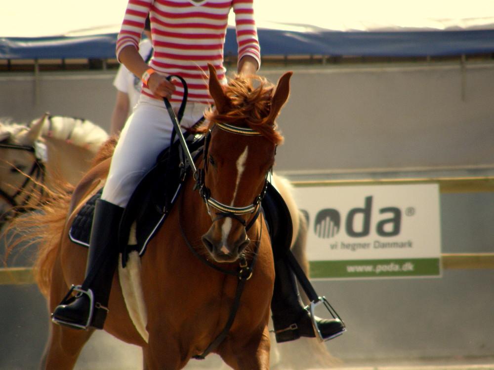 | Pferd ´|