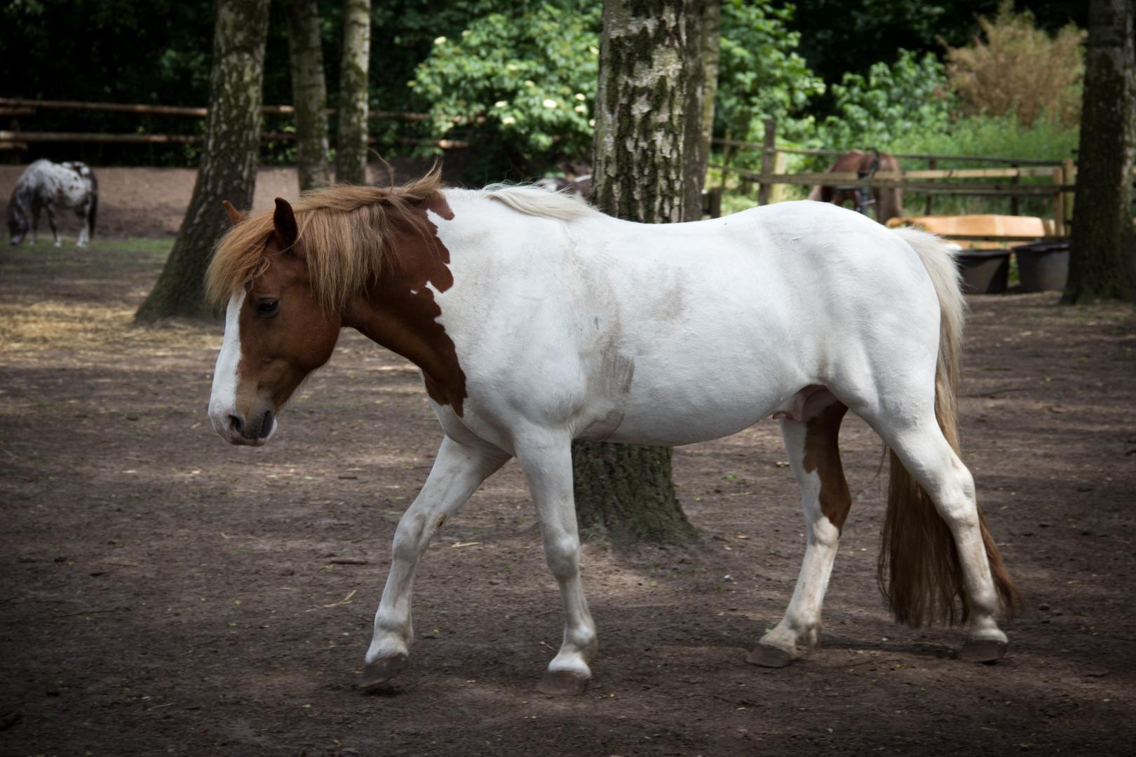 Pferd auf dem Weg ins Nirvana