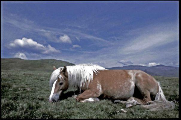 Pferd auf der Bergweide