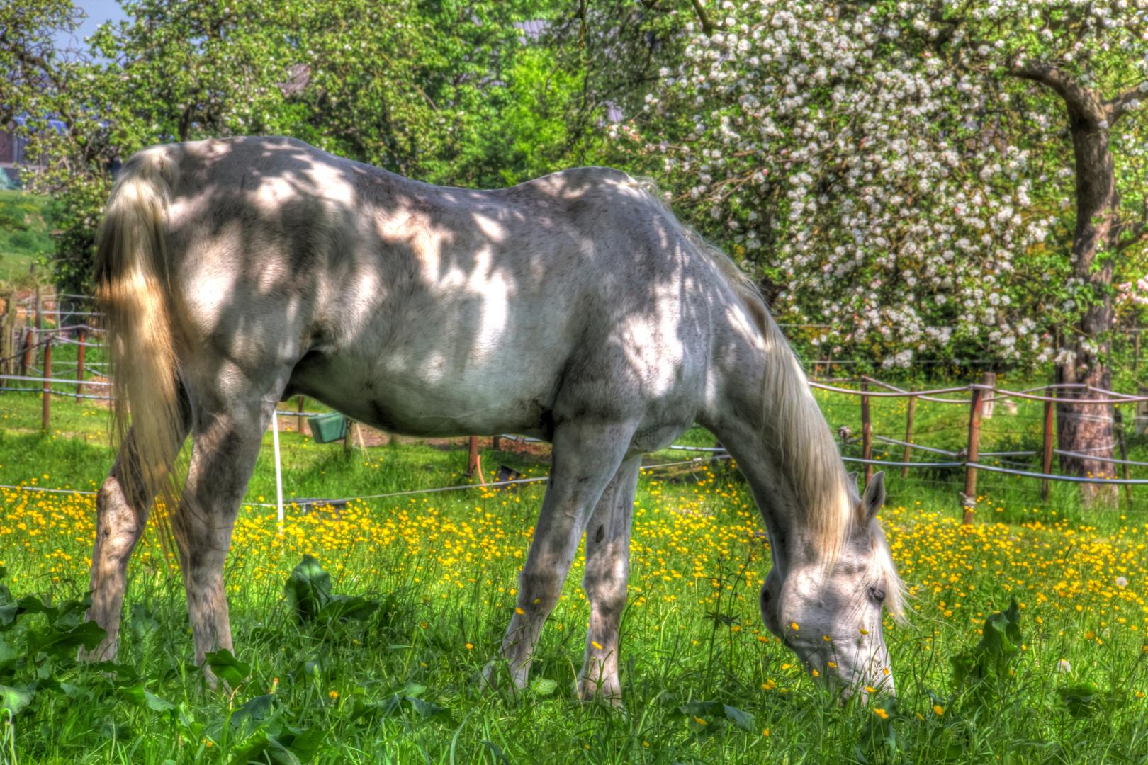 Pferd auf einer saftigen Frühlingswiese