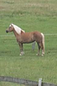 Pferd auf Weide leider zu weit weg