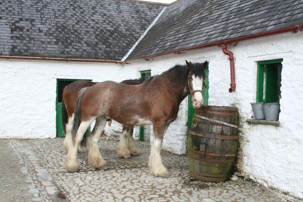 Pferd cheval horse