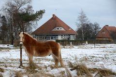 Pferd flüstert