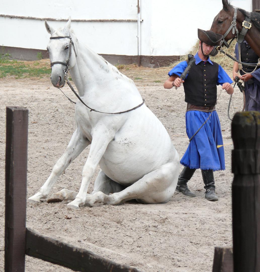 Pferd im Freilichtkiino