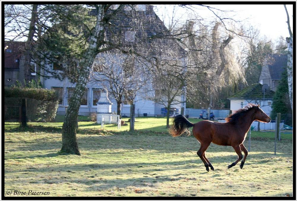 Pferd im Garten...