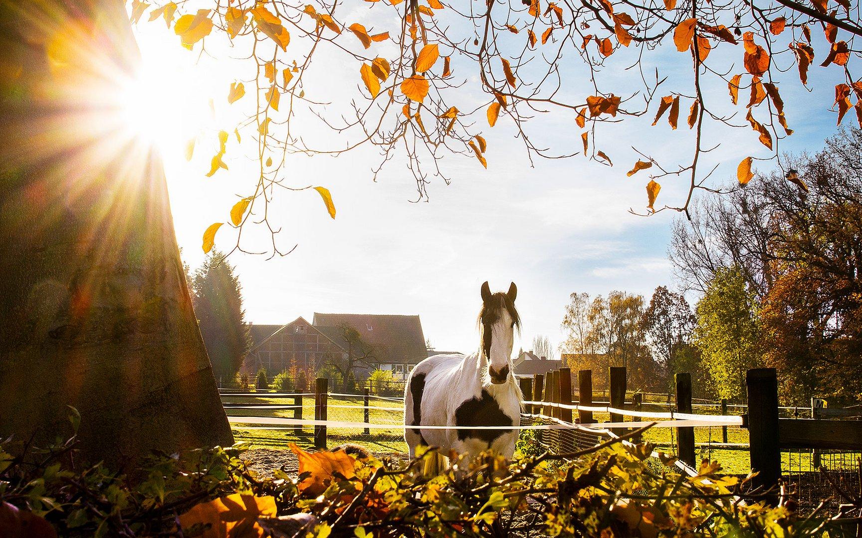 Pferd im Herbst