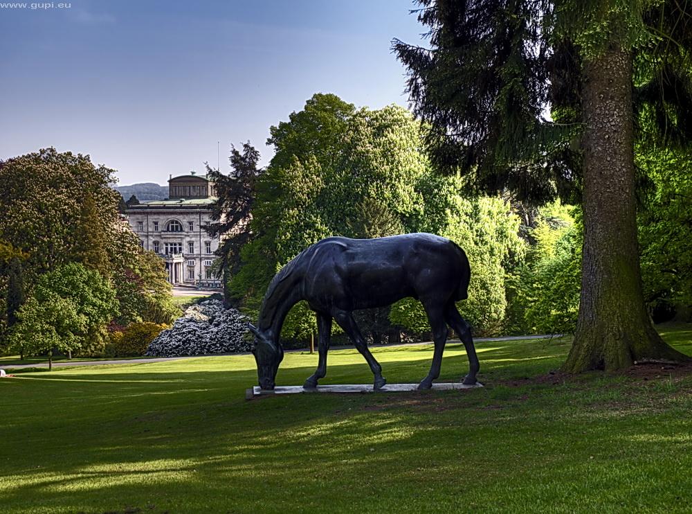 Pferd im Hügelpark Essen