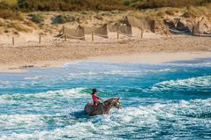 Pferd im Meer