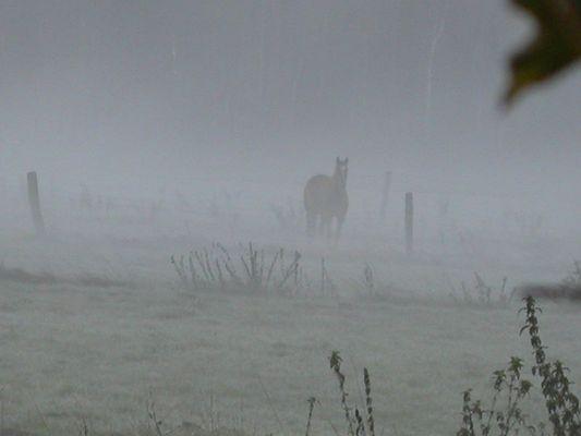 Pferd im Nebel2