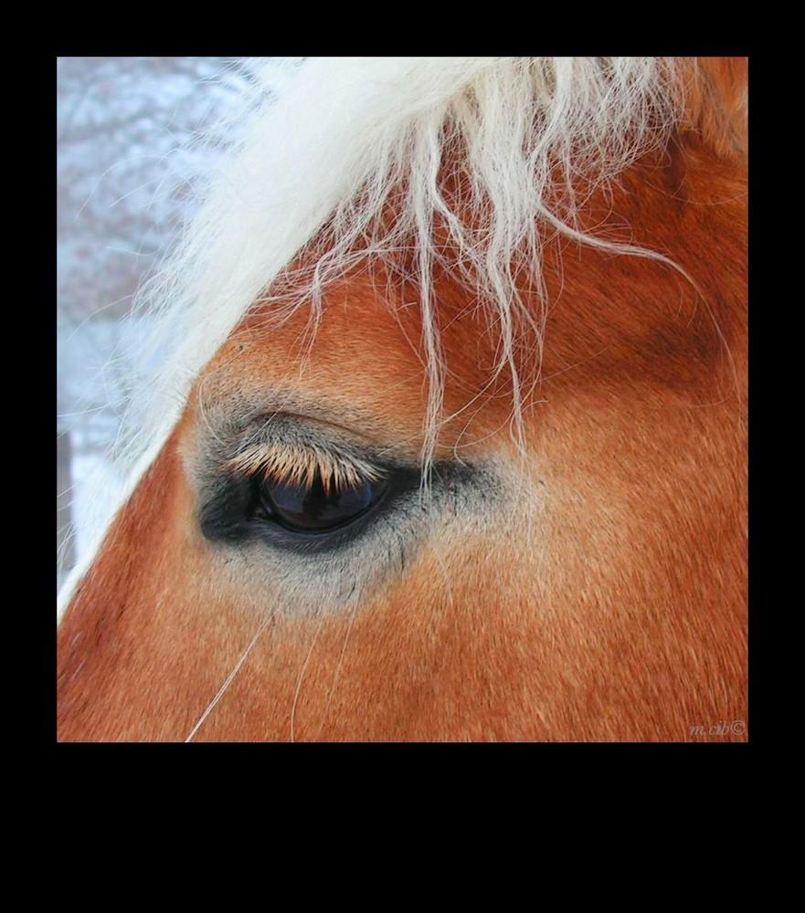 Pferd im Profil