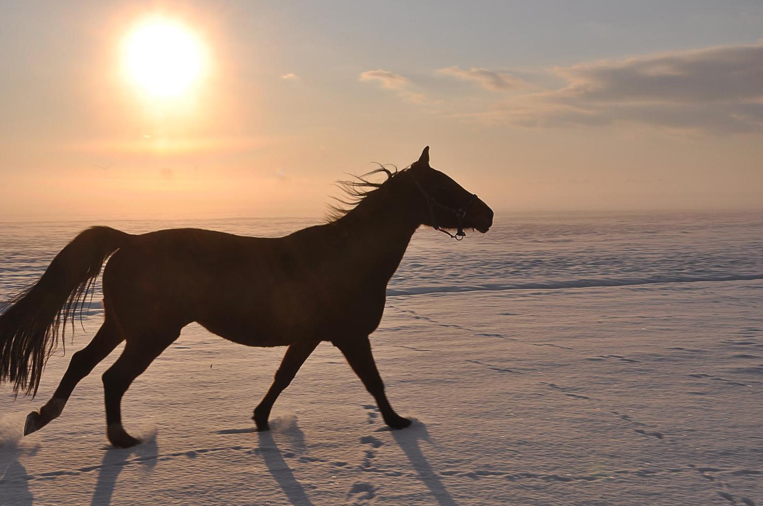 pferd im schnee foto bild tiere haustiere pferde esel maultiere bilder auf fotocommunity. Black Bedroom Furniture Sets. Home Design Ideas