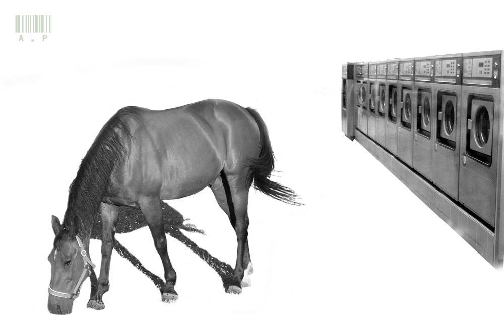Pferd im Waschsalon