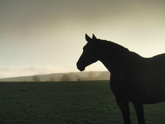 Pferd in Abendsonne bei Nebel