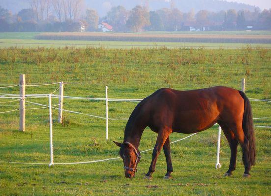 Pferd in der Abensonne