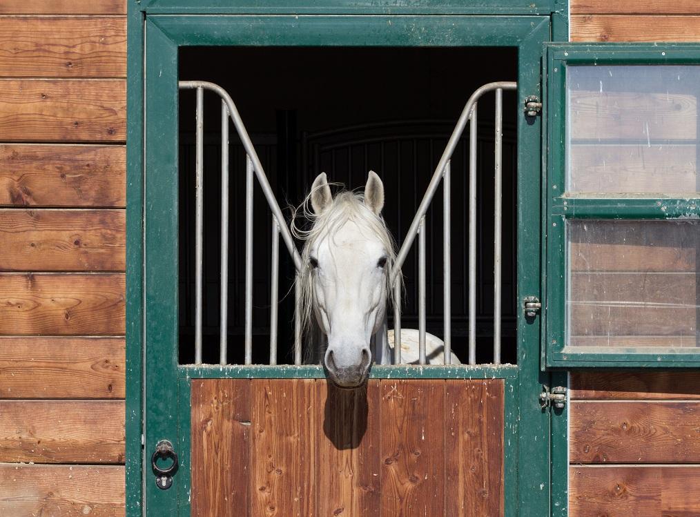 pferd in der koppel, bad tatzmannsdorf