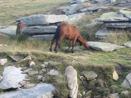 Pferd in Frankreich
