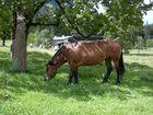 Pferd in freier Wildbahn