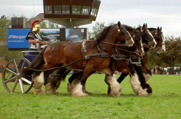 Pferd International München Riem