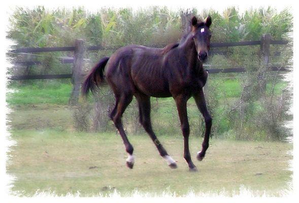 Pferd Junior
