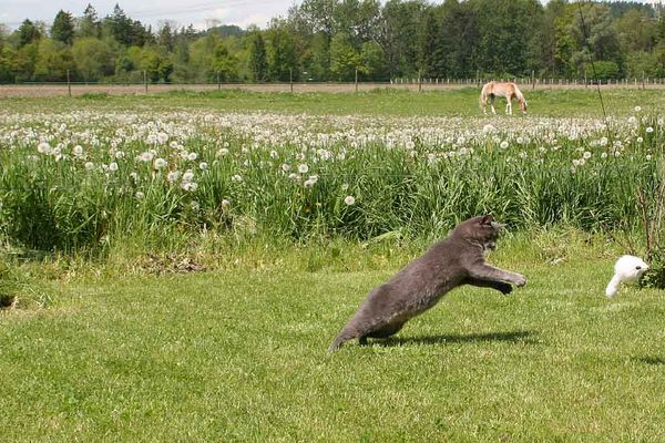 Pferd Katze Maus