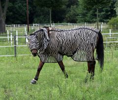 Pferd mit Fliegenschutz -1-